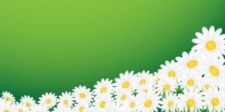 Camomille su una priorità bassa verde illustrazione vettoriale