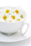 Camomille tea Royalty Free Stock Photography