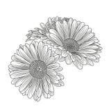 Camomille tirée par la main abstraite de fleur Élément pour la conception Illustration de vecteur Images libres de droits