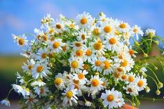Camomilles blanches dans le bouquet sur le fond de ciel bleu Macro fleurs Images stock