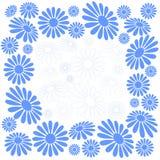 camomilles Bleu-blanches Photographie stock libre de droits