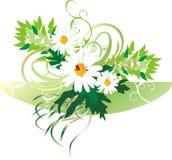 Camomilles et coccinelle. Bouquet Image stock