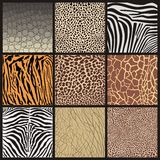 Background of African animals Stock Images