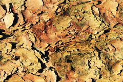Camouflage background from tree bark stock photos