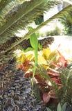Camouflage d'iguane Image stock