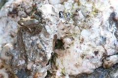 Camouflage de grenouille Photographie stock libre de droits