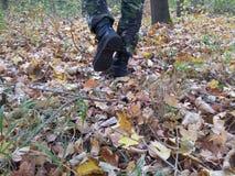 Camouflage de la forêt Photographie stock libre de droits