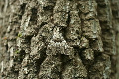 Camouflage de mite Image stock