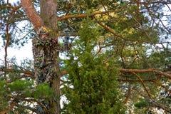 Camouflage extrême de chasseur de proue Photos libres de droits