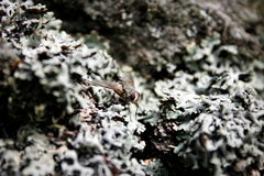 Camouflage. A fly camouflaging and hiding in it's sorroundings Royalty Free Stock Photography