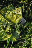 Camouflage frog in the pond. Space for text royalty free stock photos
