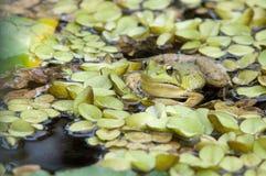 Camouflage in groen Royalty-vrije Stock Foto