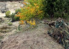 Camouflage Hunter or soldier hiding in bushes in camouflage. Camouflage Hunter or soldier aiming hiding in bushes in camouflage autumn  background. Sniper with Royalty Free Stock Photos