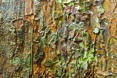 Camouflage naturel photo stock