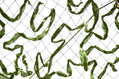 Camouflage netting. Green camouflage grid from fabric Royalty Free Stock Photos