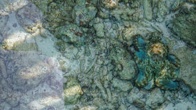 Camouflage octopus waiting for opportunities. Business abstract Stock Images
