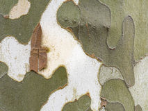 Camouflage pattern in a real tree Stock Image