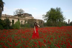 CAMOUFLAGE AMONG THE POPPIES royalty free stock photography