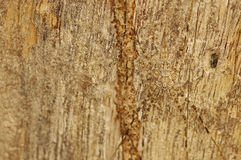 Camouflage spider. Spider has a similar color with the tree bark, that is call camouflage Royalty Free Stock Images