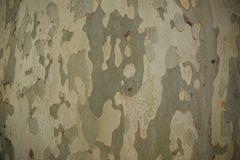 Camouflage texture of bark of tree stock images