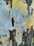 Camouflage tree, colored bark, autumn nature. Tree with camouflage texture, original photo royalty free stock photo