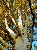 Camouflage tree, colored bark, autumn nature. Tree with camouflage texture, original photo stock photos