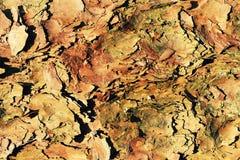 Camouflageachtergrond van boomschors stock foto's