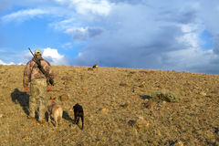 Camouflaged American hunter and tracking dogs. An American hunter with rifle, dressed in camouflage clothing, hunting coyote in an arid sunrise landscape with Royalty Free Stock Photo
