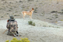 Camouflaged arid desert hunter and hunting dog. A camouflaged coyote hunter scans a desert landscape for prey beside a red heeler tracking dog while hunting in Royalty Free Stock Photography