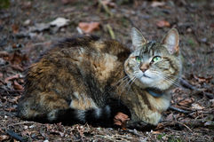 Camouflaged cat Stock Image