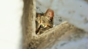 Camouflaged cat. Royalty Free Stock Photos