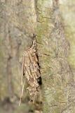 Camouflaged caterpillar Stock Photography