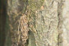Camouflaged caterpillar Royalty Free Stock Image