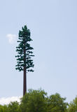 Camouflaged cell phone tower Royalty Free Stock Photography