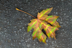 Camouflaged Fall Leaf Stock Photo