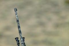 Camouflaged hunting rifle barrel gun tip royalty free stock image