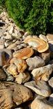 Camouflaged Mushrooms Stock Image