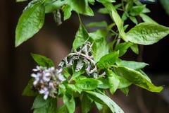 Camouflagevlinder, Samut Sakhon, Thailand Royalty-vrije Stock Afbeelding