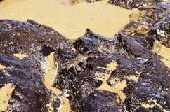 Camouflauged krab na law skałach, sekret plaża, Kauapea, Kauai, Hawaje, usa fotografia royalty free
