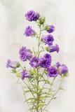 Campánula de la lila de la acuarela Imagen de archivo
