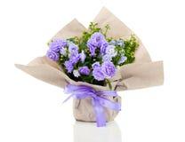 Campánula Terry con las flores azules en el empaquetado de papel Fotos de archivo