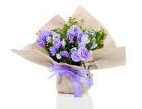 Campânula terry com as flores azuis no empacotamento de papel Fotos de Stock