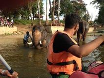 Camp d'éléphant images libres de droits