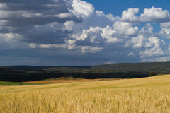 Camp de blat. Cereal fields in summer, in guadalajara, spain Royalty Free Stock Image