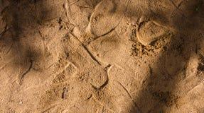 Camp de désert Images stock