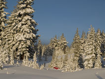 Camp de l'hiver parmi les arbres Photo stock