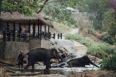 Camp de Maesa Elephan dans ChiangMai Images libres de droits