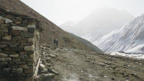 Camp de tente de Darmasala sur le passage de Larke, altitude de 4500m Voyage de circuit de Manaslu banque de vidéos