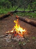 Camp fire. In the evening, Moscow region forest Stock Photos