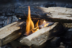 Camp fire Royalty Free Stock Image